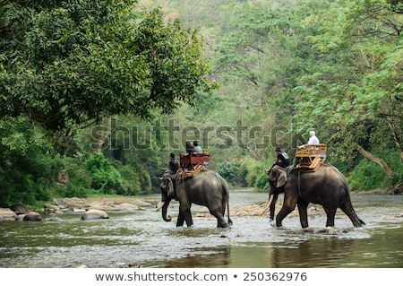 Tourists riding elephant in Thailand Stock photo © bloodua