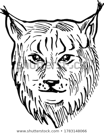 Head of a Eurasian Lynx Front View Scratchboard Style Black and White Stock photo © patrimonio