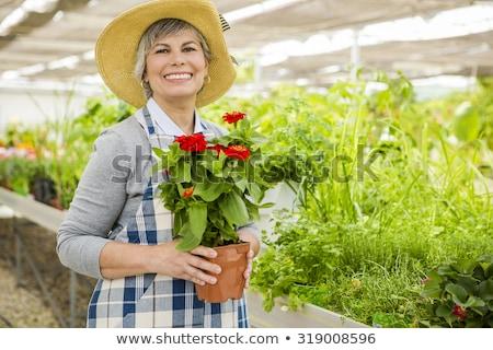 üzletasszony · tart · váza · növény · portré · fiatal - stock fotó © iko