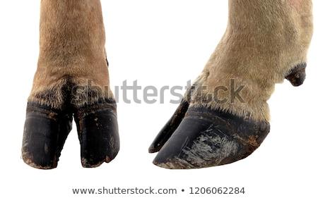 cow leg Stock photo © mariephoto
