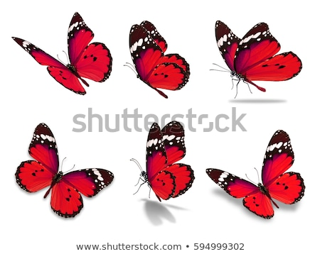 red butterfly isolated on white stock photo © photocreo
