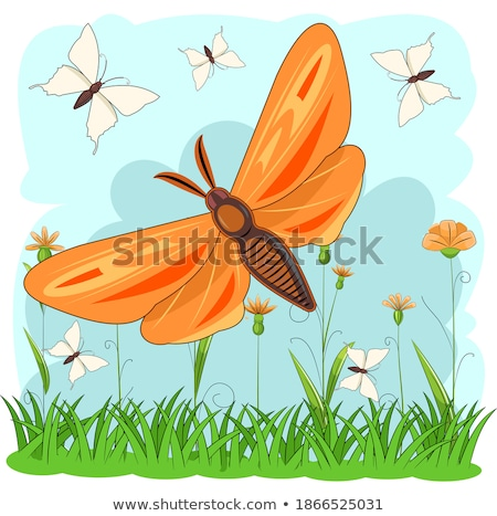 Stockfoto: Groen · gras · witte · bloemen · vierkante · bloem · gras · abstract