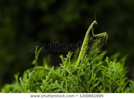 groene · groen · blad · blauwe · hemel · natuur · zomer - stockfoto © sweetcrisis