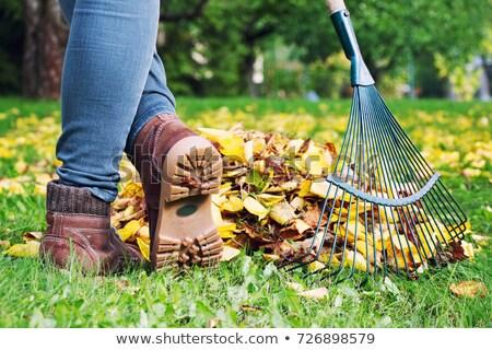 vrouw · bladeren · gelukkig · zon · werk · natuur - stockfoto © photography33