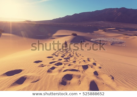 hikers in the desert stock photo © photography33