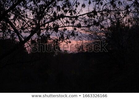 tree branches silhouette under moody sky Stock photo © sirylok