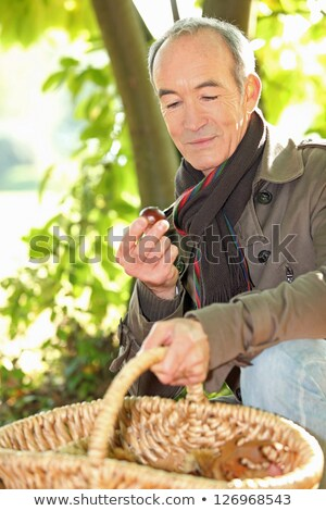 senior man picking chestnuts stock photo © photography33