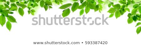 fresh green leaves border Stock photo © Lemuana