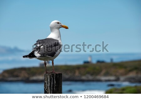 Seagull on a post Stock photo © Elenarts