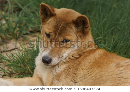 Хэллоуин · собака · гончая · тыква · языком · подвесной - Сток-фото © willeecole