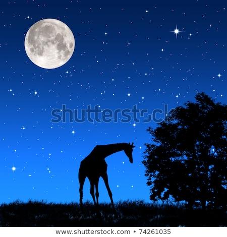 Girafă copaci Lună cer natură peisaj Imagine de stoc © mariephoto