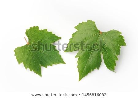 Dulce uvas hojas blanco rojo Foto stock © Masha