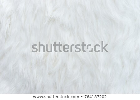 White sheep fur texture Stock photo © 5xinc