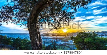 Russo igreja Jerusalém Israel cidade velha edifício Foto stock © travelphotography