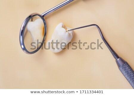 Сток-фото: Real Human Wisdom Teeth And Dental Instruments