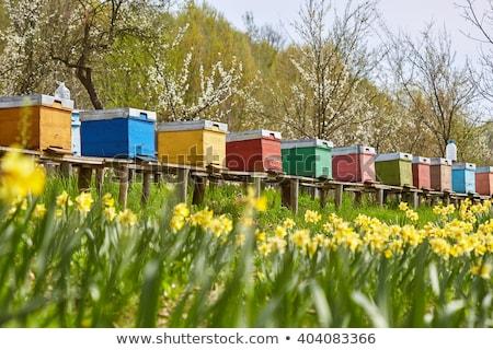abelha · atrás · pequeno · profundo · flor - foto stock © thomaseder