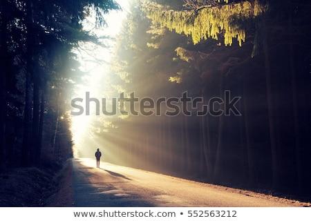 magic dawn with rays of sun stock photo © haraldmuc