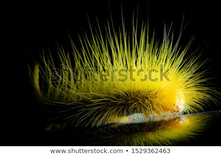 Kıllı sarı tırtıl yürüyüş zemin doğa Stok fotoğraf © Arrxxx