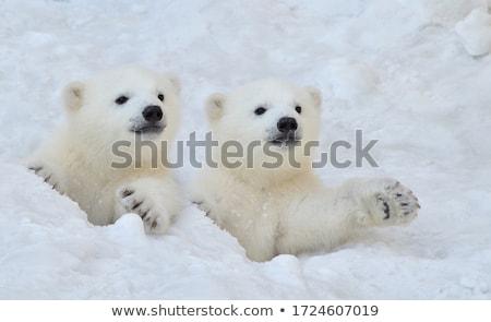 polar · neve · tenha · vetor · silhueta - foto stock © LittleLion