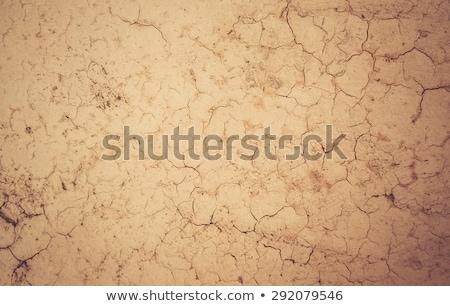 The cracks ground texture. Stock photo © brulove