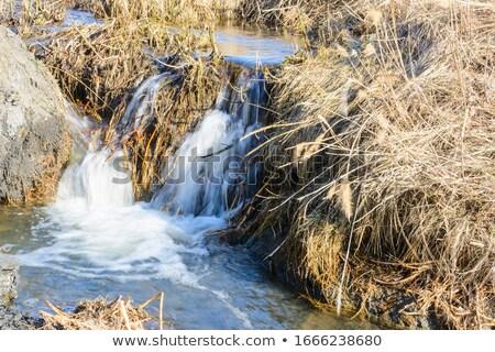 Tavasz patak kicsi vízesés kő erdő Stock fotó © ondrej83