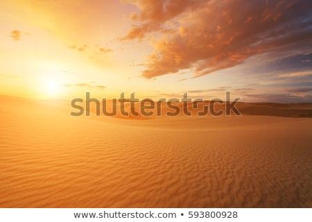 砂漠 日没 画像 いい 自然 光 ストックフォト © magann