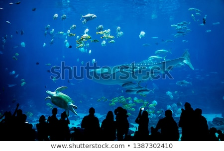 aquário · escuro · peixe · luz · saltar · animais - foto stock © lom