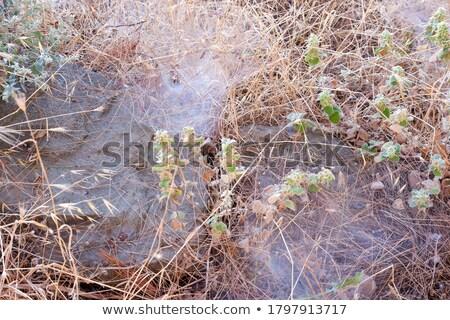Toile d'araignée jungle étage artistique bokeh mer Photo stock © ivanhor