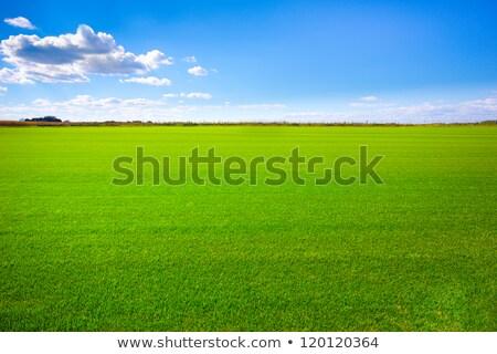 Grass field Stock photo © ia_64