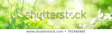 Fresh green nature stock photo © olandsfokus