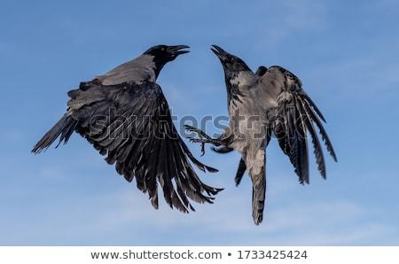 Hemel mooie natuurlijke natuur achtergrond vogel Stockfoto © jonnysek