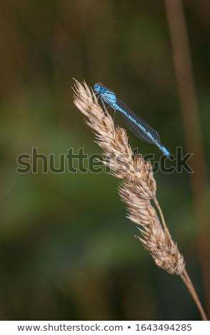 libélula · preto · e · branco · fundo · preto · branco - foto stock © lkpro