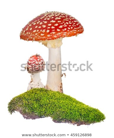 Red fly agaric (amanita muscaria) on white background Stock photo © BSANI