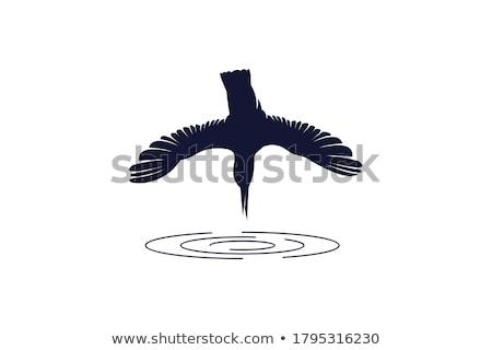зимородок дизайна иллюстрация красочный Сток-фото © Tawng