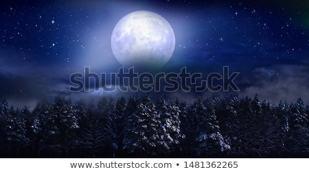 A bright full moon at the forest Stock photo © bluering