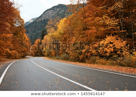 road in autumn stock photo © tracer