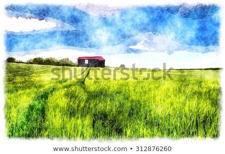 納屋 · ファーム · 風景 · 木材 · 夏 · ヴィンテージ - ストックフォト © zurijeta