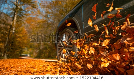 Leafs on the road Stock photo © iko