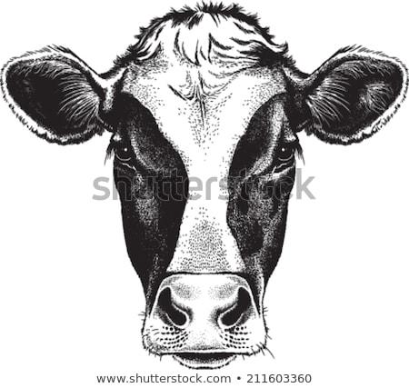 tehén · kézzel · rajzolt · rajz · ikon · vektor · skicc - stock fotó © rastudio