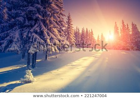 tél · tájkép · naplemente · út · hó · égbolt - stock fotó © tekso