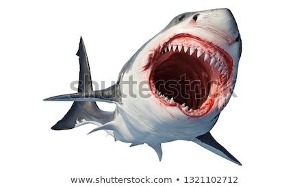 Magnifique blanche requin illustration sourire heureux Photo stock © bluering
