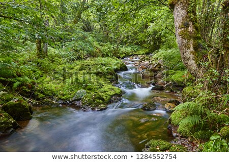 Muniellos River  Stock photo © asturianu