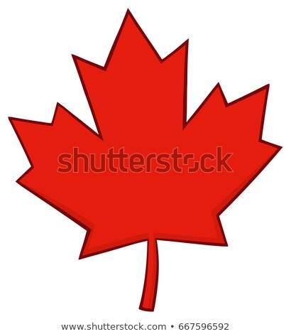Kırmızı akçaağaç yaprağı hat karikatür çizim yalıtılmış Stok fotoğraf © hittoon