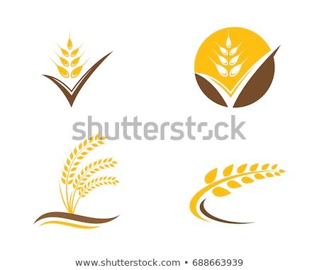 сельского хозяйства пшеницы логотип шаблон вектора икона Сток-фото © Ggs