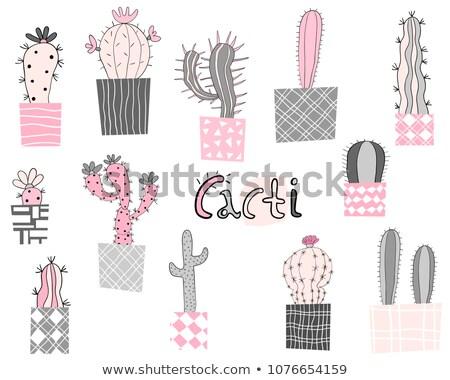 Cute Vector Geometric Cactus Plants In Elegant Style In Pink And Gray Stockfoto © Pravokrugulnik