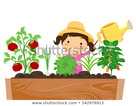 Stickman Kid Girl Carrot Watering Stock photo © lenm