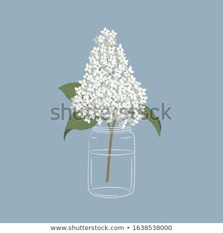 Vektör vazo buket çiçekler beyaz Stok fotoğraf © kostins