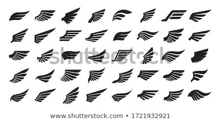 falcão · abrir · asas · preto · e · branco · ilustração · arte - foto stock © sifis
