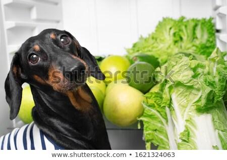 Bio leaves concept and cook portrait Stock photo © ra2studio