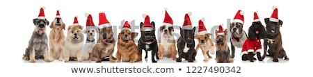 large merry group of different dogs wearing santa costumes stock photo © feedough